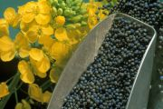 SEEDPROT: Protein content and quality in Brassica napus seed